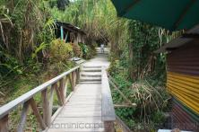 Walkway to natural hot springs in Roseau Dominica.jpg