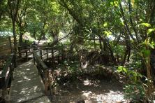 Boardwalk through rain forest near natural hot springs in Roseau Dominica.jpg