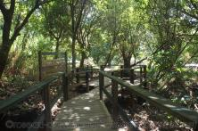 Boardwalk to natural hot springs in Roseau Dominica.jpg