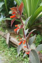 Pictures of Plants & Flowers of Dominica