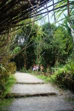 Walking path at Roseau Dominica hot springs.jpg
