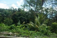 Palm trees and other tropical foliage at Roseau Dominica.jpg
